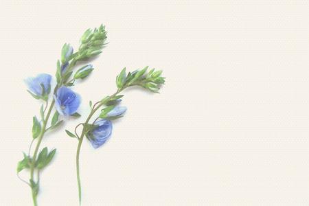 luz natural: flor de primavera azul sobre un fondo claro.