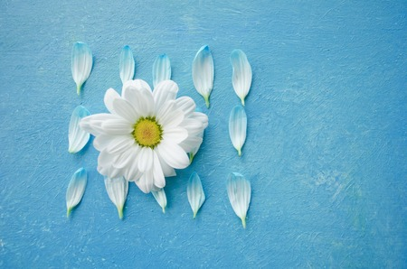 guess: Chamomile flower and petals isolated on turquoise surface. Guess on daisy. Poster design element.