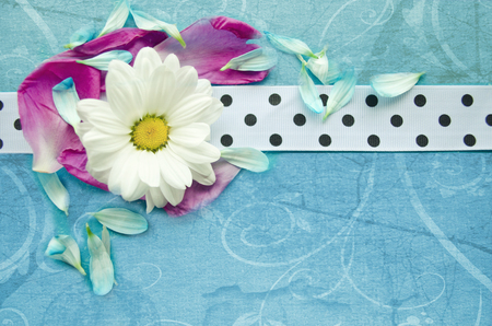 spotted flower: Wooden turquoise surface with chamomile, colorful flower petals and white spotted ribbon. Beautiful template for your design.