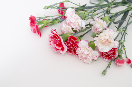 Bunch of fresh pink carnations on a light tablecloth. Horizontal format. Cut beautiful spring flowers. Mothers Day background. Top view. Holiday and seasonal design. Greeting card and copy space.