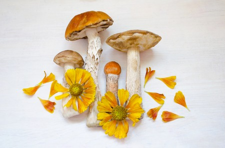 king fern: Aspen mushrooms. Orange-cap mushroom isolated on wooden background with flowers.