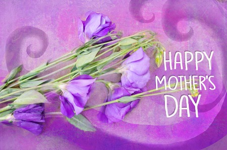 Violet austoma on a violet background. Flower grunge background. Greeting Card Mothers Day, 版權商用圖片