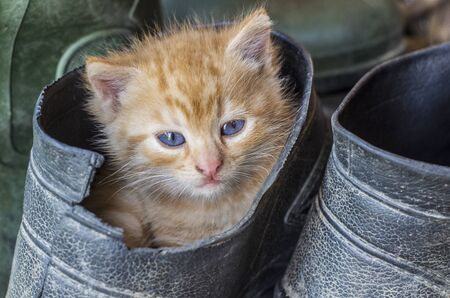Kitty in a rubber boot. Cute rural photo. Little red kitten,