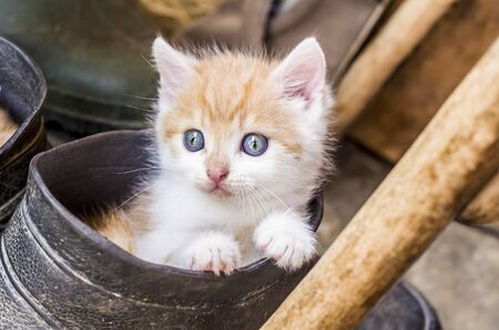 Kitty in a rubber boot. Cute rural photo.Little red kitten,
