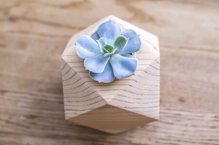 Colorate Echeveria in a wooden planter on a wooden table. Photo succulent decor in Hoogge style.