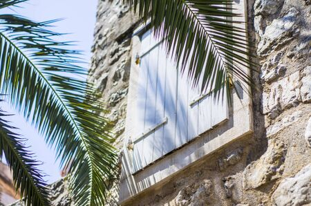 Palm branch on the background of the window with shutters. Old town. Stok Fotoğraf