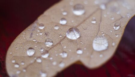 Water drops on brown leaf. Nature background. Stok Fotoğraf