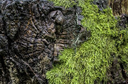 Mud sphagnum is a floral texture. Seasonal forest photo. Old stump photo of elements of nature. Imagens