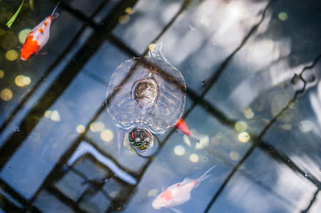 Decorative turtle and fish in an artificial pond. Animal photo. Imagens