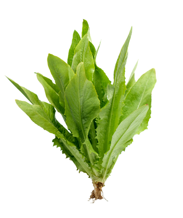 Lettuce on white background Standard-Bild