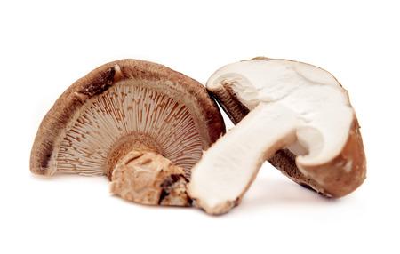 gills: Shiitake mushroom on the White background