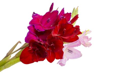 beautiful bright gladiolus flower spring bouquet isolated on the white Foto de archivo