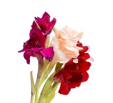 beautiful bright gladiolus flower spring bouquet isolated on the white Фото со стока