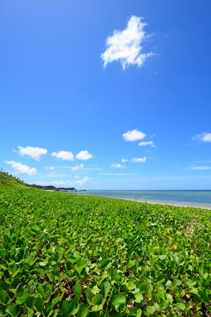 subtropical plants: Beautiful beach in Okinawa