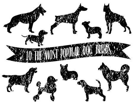 breeds: Dog breeds set. Dogs icons. Dog breeds silhouette. The most popular dog breeds with crumpled paper effect.