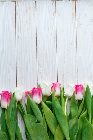 Pink adn White Tulips on white wooden background. Copy space