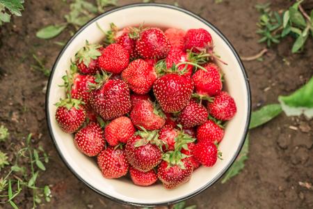 Fresh strawberry in bowl in the garden Outdoor Summer Selective Focus. Top view. Copy space Standard-Bild