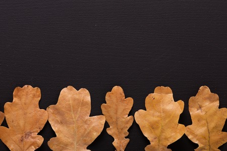 Autumn background. Dry oak leaves on black table. Top view. Flat lay.