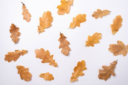 Yellow oak leaves on a white background Autumn concept Top view Season school theme