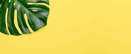 Tropical leaf Monstera on yellow background. Top view. Flat lay. Horizontal banner - Image Zdjęcie Seryjne
