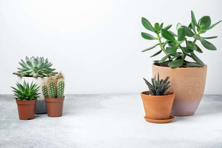 Various succulents in different pots on stone table indoor. Plant transplantation. Concept of indoor garden home. Horizontal banner - Image