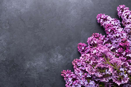 Branches of purple lilac on dark stone background. Top view. Copy for your text - Image