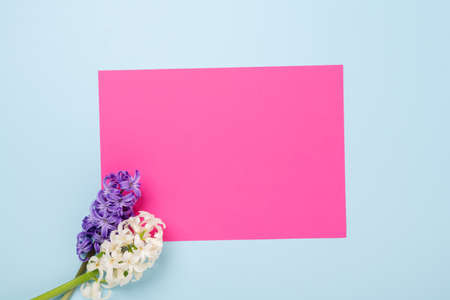 Spring mockup with multicolored hyacinths and blank of pink paper on blue background. Easter concept. Copy space. Top view - Image