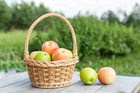 Green and red apple in wicker basket on wooden table Green grass in the garden Harvest time Organic food Rustic style