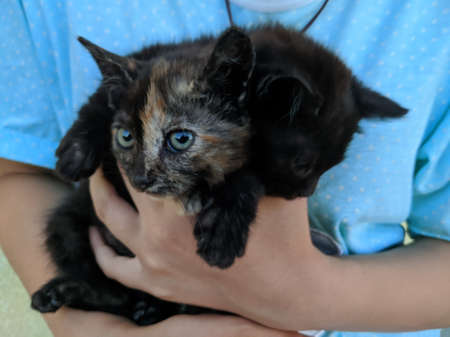 Spotted black kitten in the arms of a girl in blue
