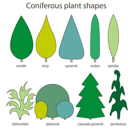 Coniferous plant shapes - disheveled spherical cascade pyramid pendulous candle drop spindle rocket