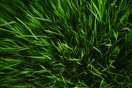 Summer grass background