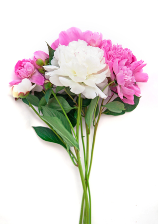 Bouquet of pink and white peonies on a white background. Young fresh plants. isolated Stock Photo