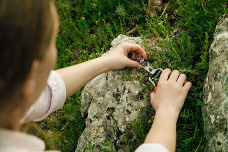 Female hands collect mountain herbs with garden shears. Fragrant thyme grows between stones Zdjęcie Seryjne