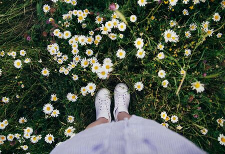 Top view on feet in white sneakers in a green field full of white flowers. Summer chamomile field. Greeting summer holiday and travel