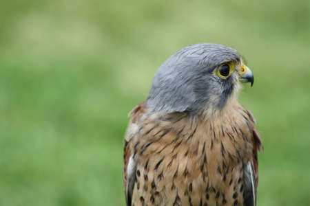 bird of prey 1 photo