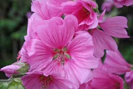 pretty pink flower  photo
