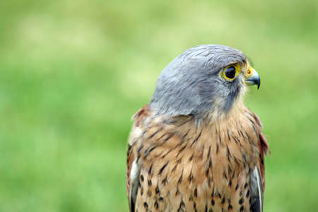 bird of prey 3 photo