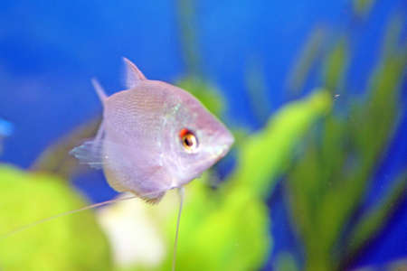 tropical fish  Stock Photo - 9485033
