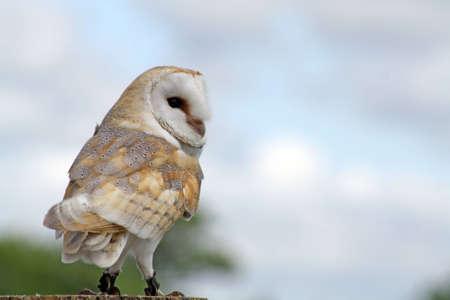 stunning owl Stock Photo - 9863648