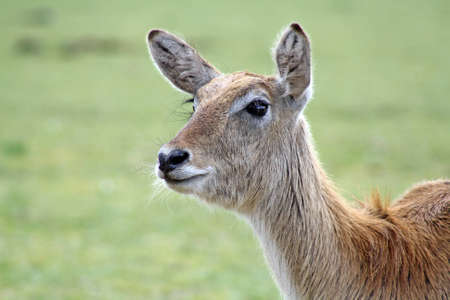 wonderful deer Stock Photo - 9863690