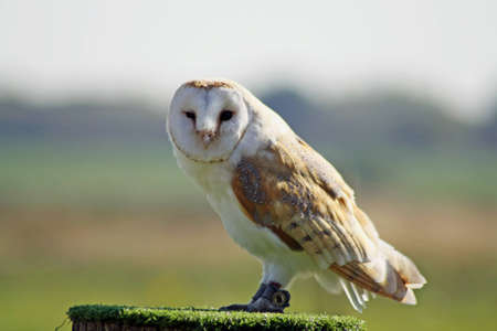 owl Stock Photo - 11846612