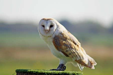 owl Stock Photo - 11846612