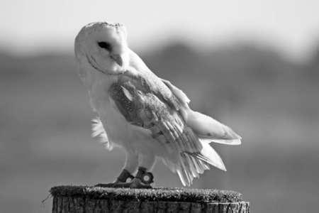 stunning owl photo