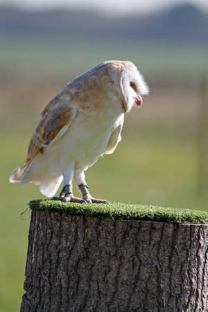 owl photo