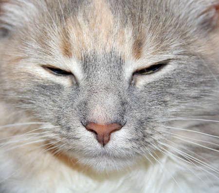 tabby cats face