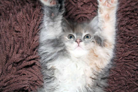 playful kitten photo