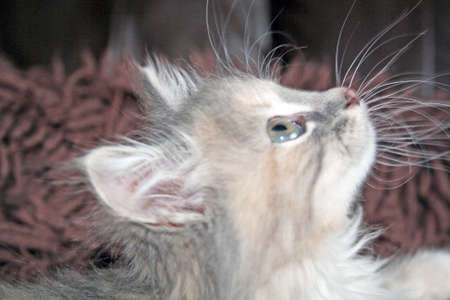 sweet kitten photo