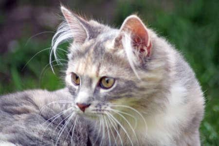 pretty cat photo