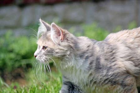 stunning kitten  photo