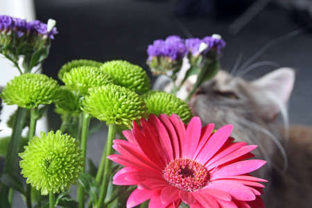 kitten smelling flowers photo